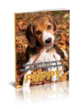 Succesvolle-tips-voor-de-verzorging-en-training-van-je-puppy