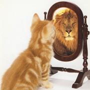 Kat kijkt in de spiegel en ziet een leeuw.